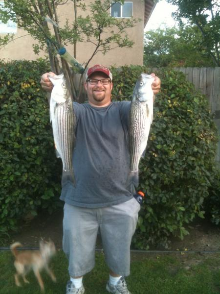 Striper at the duct kern fishing for Kern river fishing spots
