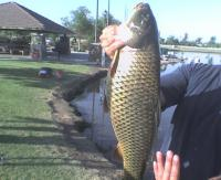 Riverwalk Carp