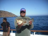 Limit of calico bass